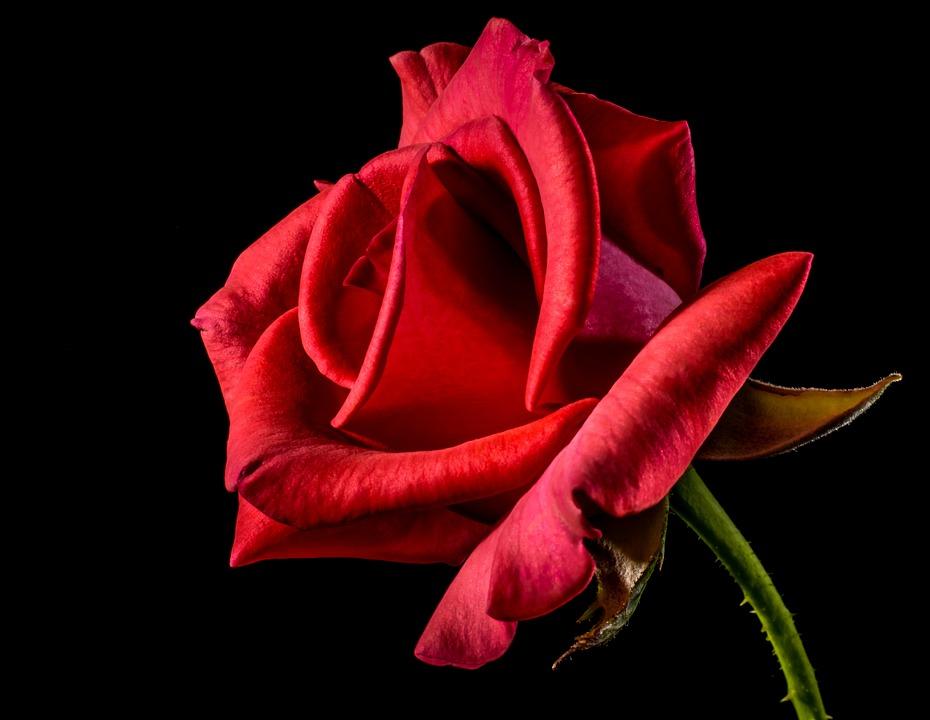 Come Fare un Bouquet di Rose Rosse